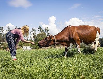 Carbon neutral dairy