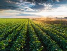 Perstorp enters fertilizer market with chloride-free potassium product